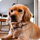 Adopt A Pet :: Lil Bit O' Luck