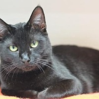 Adopt A Pet :: Faddle 14306 - Atlanta, GA