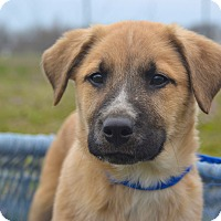 Adopt A Pet :: *Roman - PENDING - Westport, CT