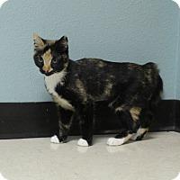 Adopt A Pet :: Rose - Lakeland, FL