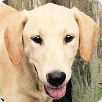 Adopt A Pet :: Prescott#4F - Orlando, FL