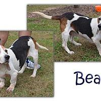 Adopt A Pet :: Bea - Marietta, GA