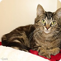 Adopt A Pet :: Theodore Rattlington - Ann Arbor, MI
