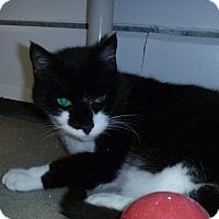 Adopt A Pet :: Izzy - Hamburg, NY