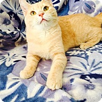 Adopt A Pet :: Blue - Addison, IL