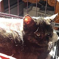 Adopt A Pet :: Sage - East Brunswick, NJ