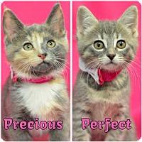 Adopt A Pet :: Perfect160919 - Atlanta, GA
