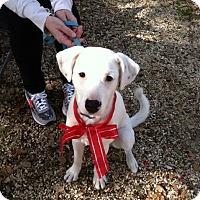Adopt A Pet :: Louie - Fair Oaks Ranch, TX