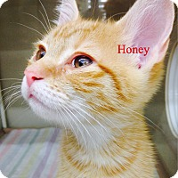 Adopt A Pet :: Honey - Warren, OH