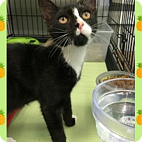 Adopt A Pet :: Waldo - Atco, NJ