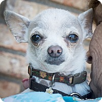 Adopt A Pet :: Luna - San Marcos, CA