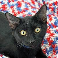Adopt A Pet :: Parsley - Mountain Center, CA
