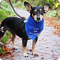 Adopt A Pet :: Carmichael - Fort Atkinson, WI