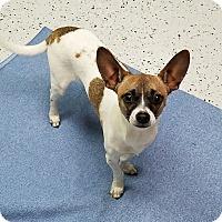 Adopt A Pet :: Buddy - Burgaw, NC