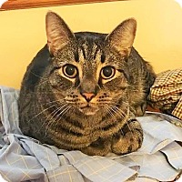 Adopt A Pet :: Weeble - Wayne, NJ