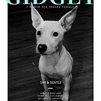 Adopt A Pet :: Gidget - Des Moines, IA