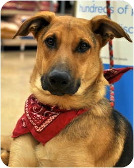 Berry | Adopted Dog | ...