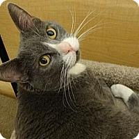 Adopt A Pet :: ALI - Diamond Bar, CA