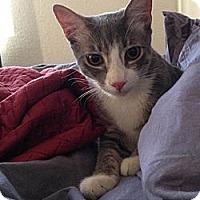 Adopt A Pet :: Dibs - Chandler, AZ
