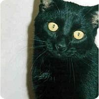 Adopt A Pet :: Mario - Medway, MA
