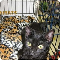 Adopt A Pet :: Sable - Los Alamitos, CA