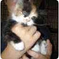 Adopt A Pet :: Cali & Connor - Arlington, VA
