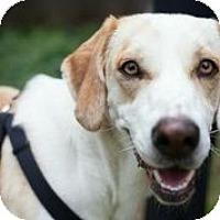 Adopt A Pet :: Tilda - Austin, TX