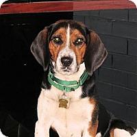 Adopt A Pet :: Luigi - Novi, MI