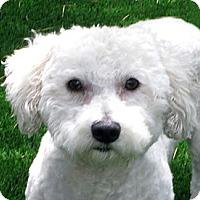 Adopt A Pet :: Casey - La Costa, CA