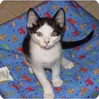 Adopt A Pet :: Davey - KANSAS, MO
