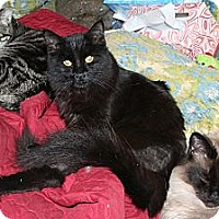 Adopt A Pet :: Dandylion - Santa Rosa, CA