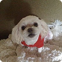 Adopt A Pet :: Roxy - Hilliard, OH