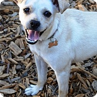 Adopt A Pet :: Sassafras (a.k.a. Sassy) - Oakland, CA
