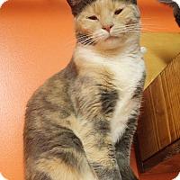 Adopt A Pet :: Clover - Estherville, IA