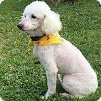Adopt A Pet :: AARON - Melbourne, FL