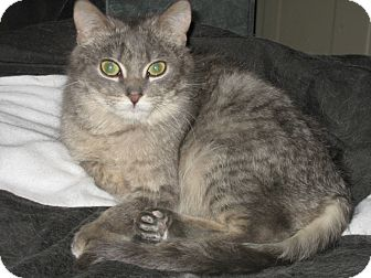 Domestic Shorthair Cat for adoption in Sheboygan, Wisconsin - Elsa and Elizabeth