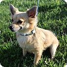 Adopt A Pet :: SIMBA