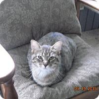 Adopt A Pet :: Elizabeth - Riverside, RI