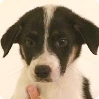 Adopt A Pet :: Ghost#2F - geneva, FL