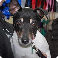 Adopt A Pet :: Dom - Brooklyn, NY