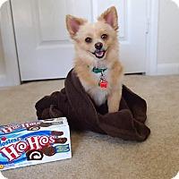 Adopt A Pet :: HOHO - conroe, TX