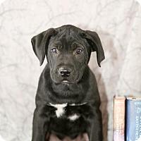 Adopt A Pet :: Lupin - Little Rock, AR