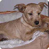 Adopt A Pet :: sandi - Yucaipa, CA