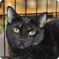 Adopt A Pet :: Annie - Yorba Linda, CA