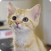 Adopt A Pet :: Timmy - Knoxville, TN