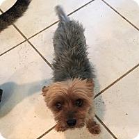 Adopt A Pet :: Meko - Clermont, FL