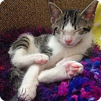 Adopt A Pet :: Yueh - Marietta, GA