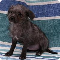 Adopt A Pet :: Zena - Santa Fe, TX