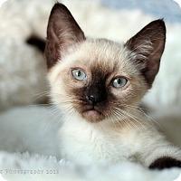 Adopt A Pet :: Whistler - Rocklin, CA