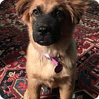 Adopt A Pet :: Harvey Wallbanger - Royal Palm Beach, FL